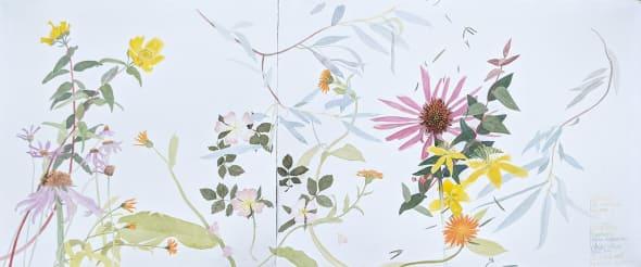 Medicinal and Healing Plants