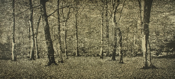 The Beech Wood