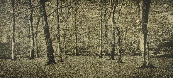 The Beech Wood