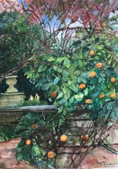 The Orange Tree at the Chelsea Physic Garden