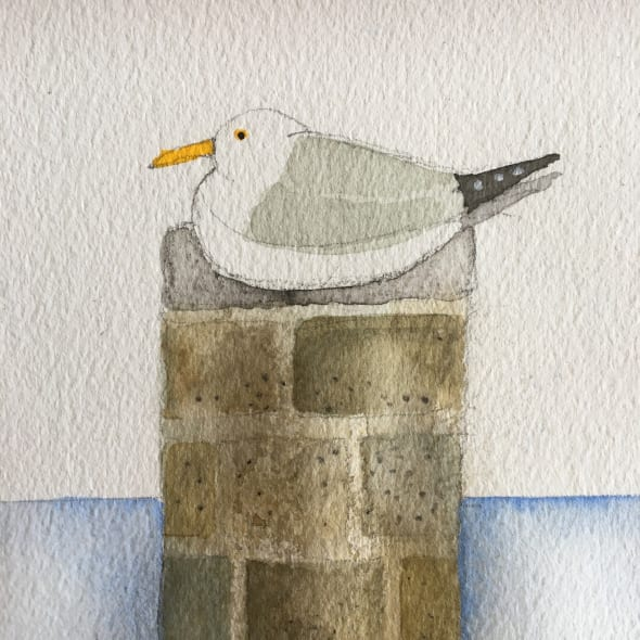 St Ives Seagull