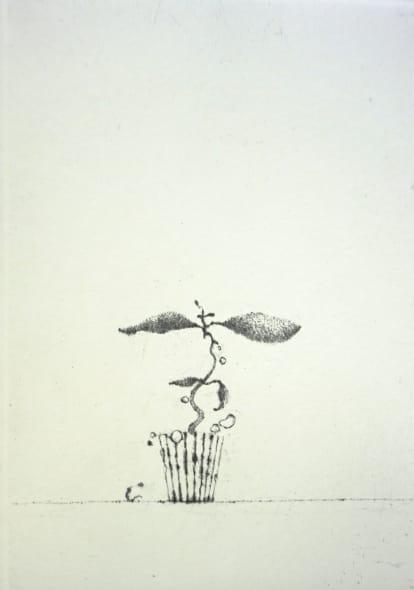 Maev´s Peculiar Plant