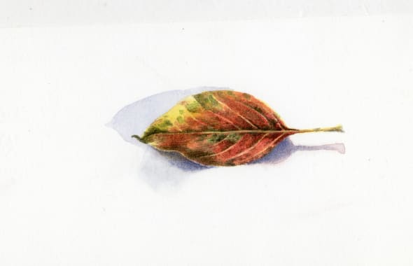 Autumn Leaf II