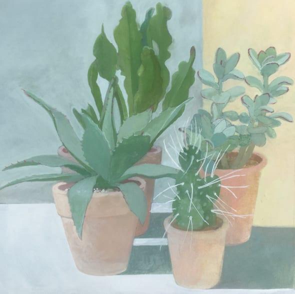 Aloe Parryi