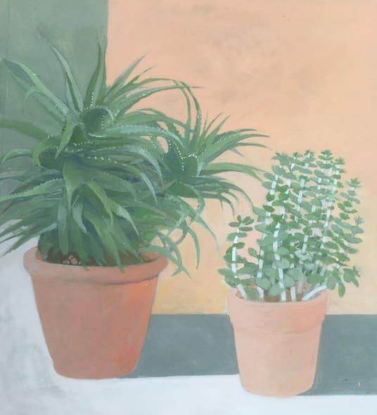Aloe Principis