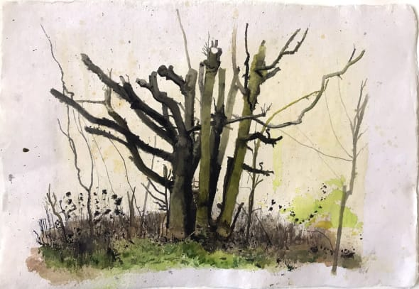 Elsecar Cropped Trees Study 3