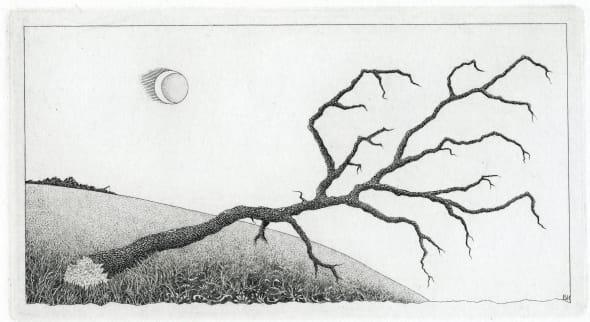 Stricken Tree - Bodmin Moor