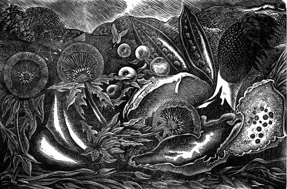 Nature Morte II