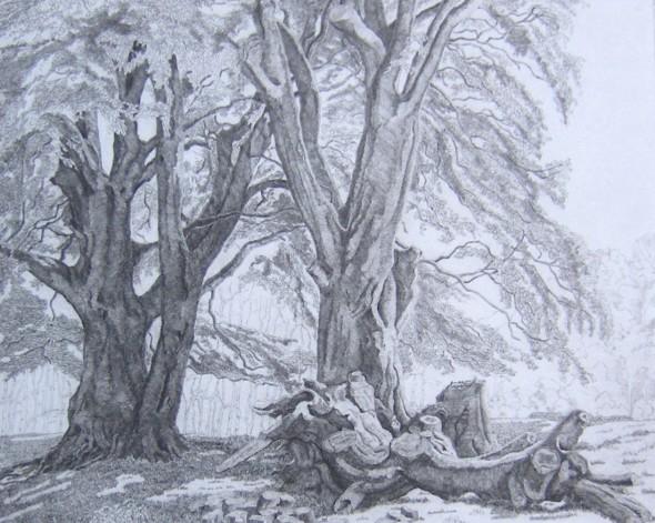 Exmoor Beeches