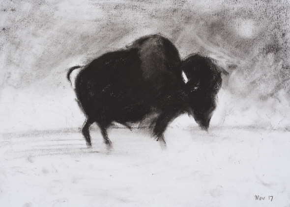 Jim Moir, Bison, 2017