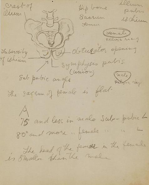Francis Newton Souza, Untitled (Anatomy study with text), 1942