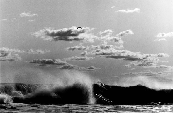 Wave and Seagull, 1984