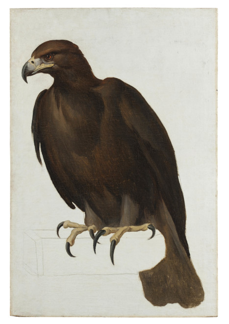 """<span class=""""artist""""><strong>Vincenzo Camuccini</strong></span>, <span class=""""title""""><em>Eagle</em>, c. 1805-1807</span>"""