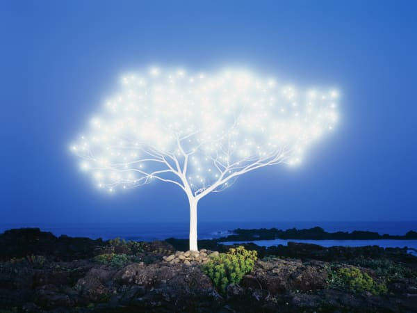 Lee JeongLok, Tree of Life 5-1-1, 2013
