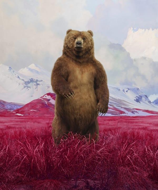Jim Naughten, Bear, 2021