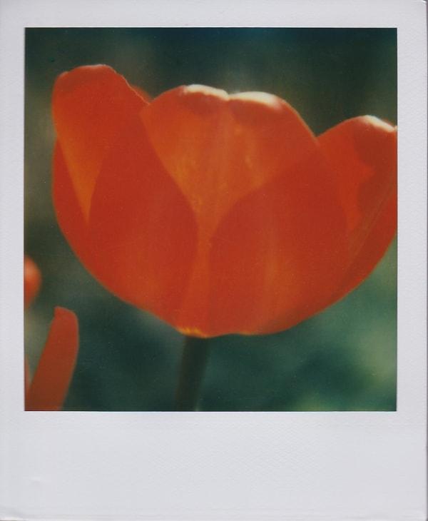 Fleurs et végétaux