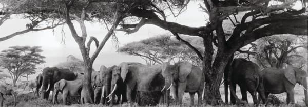 Peter Beard, Gardeners of Eden (Elephants and Baboons under Kilimanjaro), 1984-printed 2014