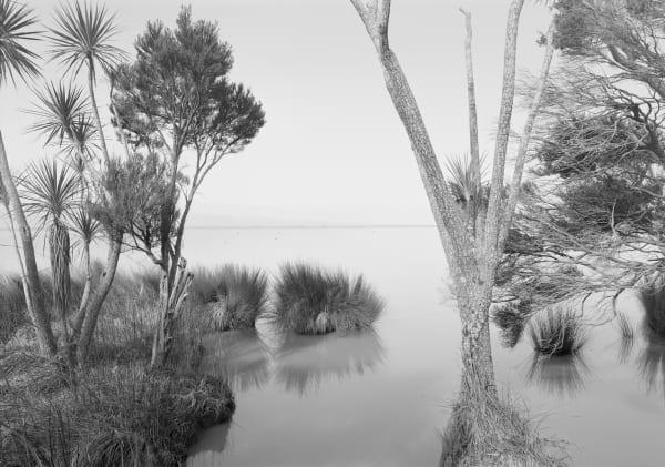 Wayne Barrar, From lakeside Cordyline, Lake Wairarapa 2011, 2011