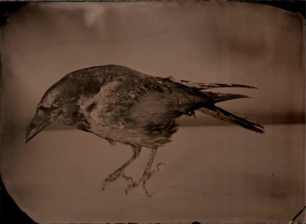 Jasmine Togo-Brisby, Ruffled Feathers, 2017