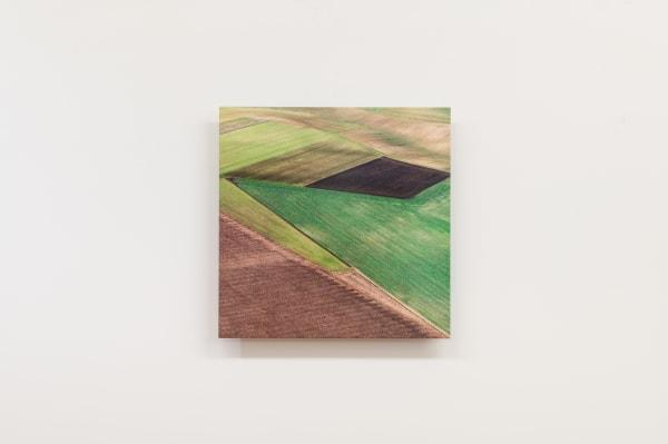 Elizabeth THOMSON, Field Study XII, 2021
