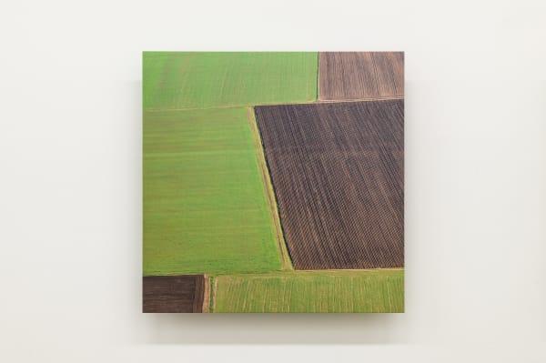 Elizabeth THOMSON, Field Study XV, 2021