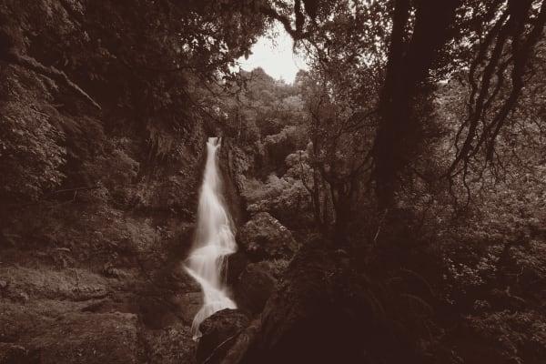Wayne Barrar, From the Banks of Waipahatu Toward Pouriwai Falls, The Catlins 2013, 2013