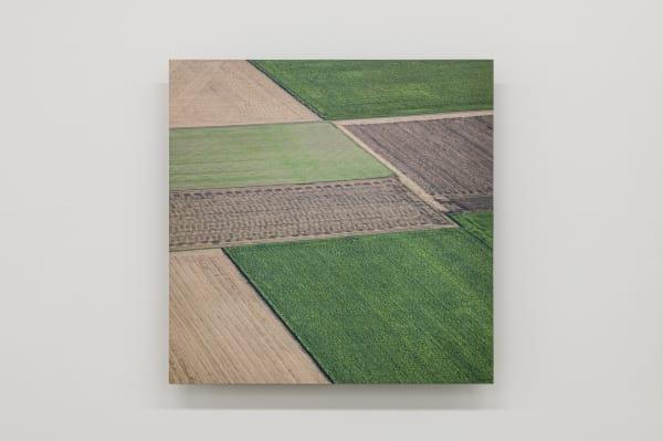 Elizabeth THOMSON, Field Study XIII, 2021