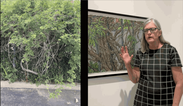 """Beth Secor on """"Wisteria, Apartment Complex"""", acquired by the City of Houston"""