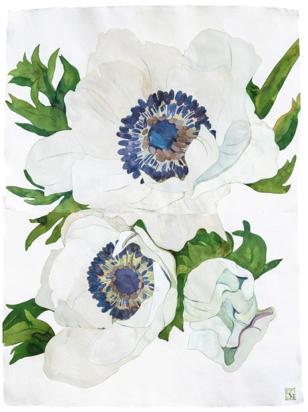 Sarah Graham, Anemone coronaria II, ink on paper, 2020
