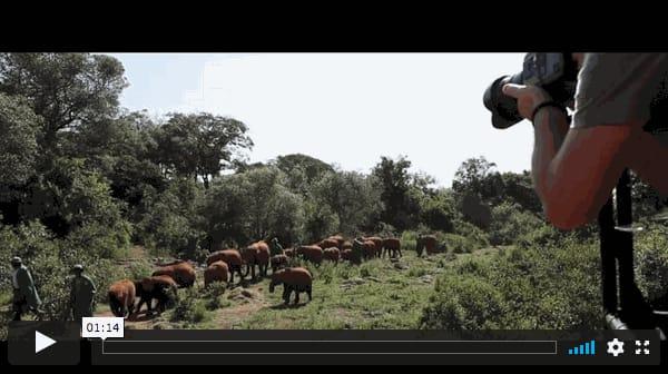 Elephants in Heaven, Behind the Scenes