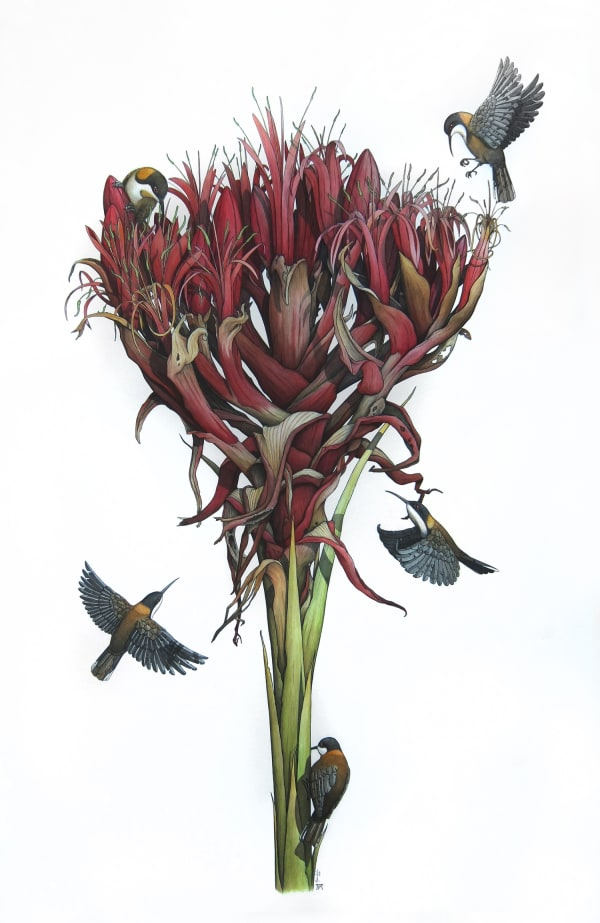 Gymea Lily with Eastern Spinebills