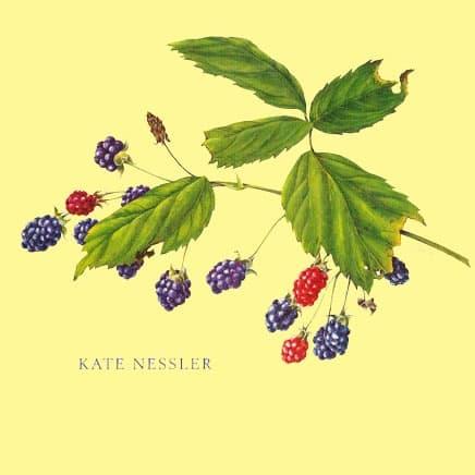 Kate Nessler