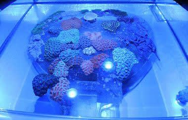 Glenn Kaino's living coral paintings at Prospect.3 Photo: Dough MacCash