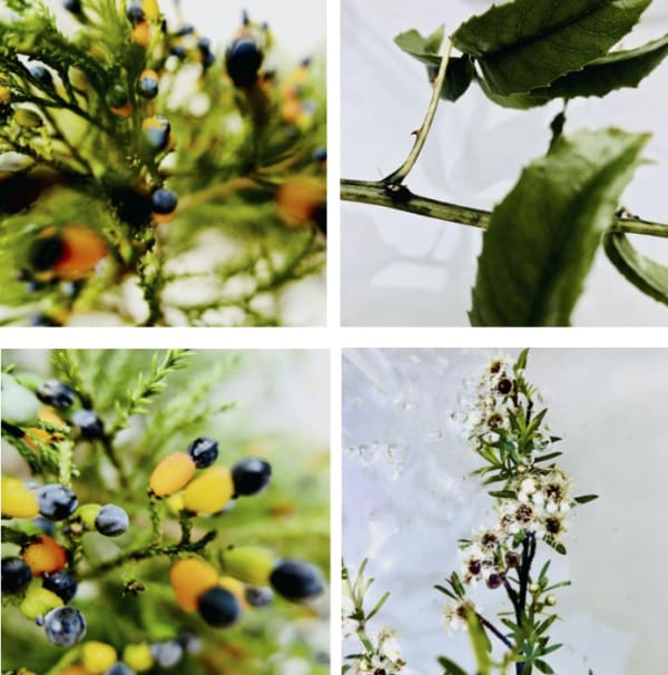 Art of Foraging - July/August Winter