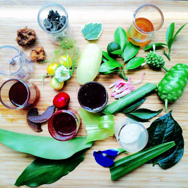 Edible plants foraged in the centre of Singapore