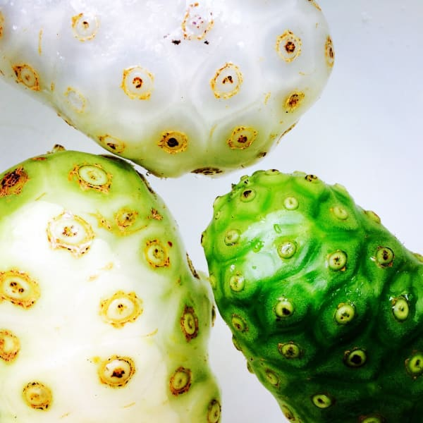 Noni Fruits (Morinda citrifolia) by Mamakan