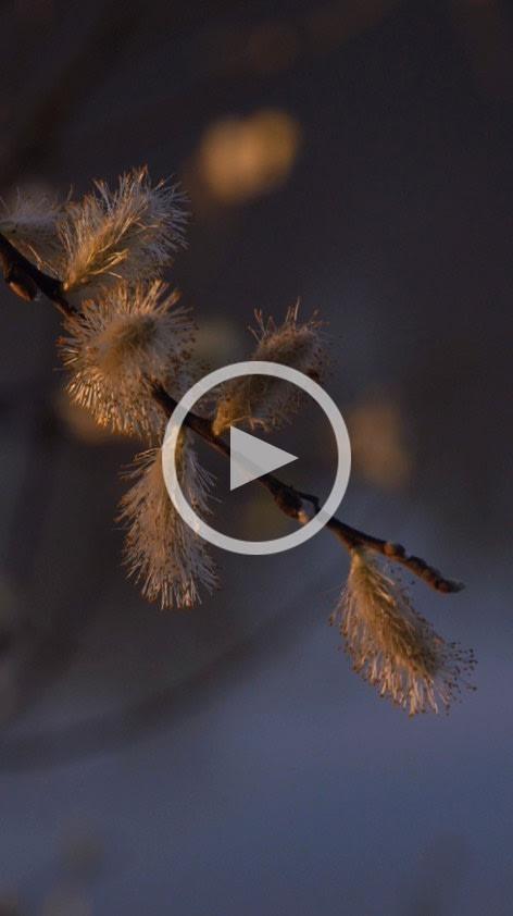 Etang de Pezières IV: 48 Hour Film