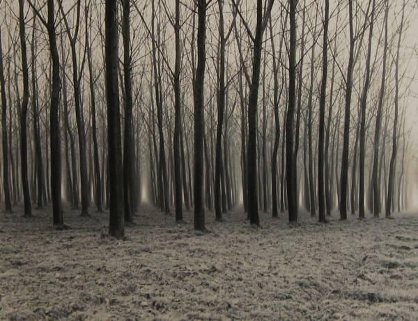 Linda Butler, Poplar Forest, 2000
