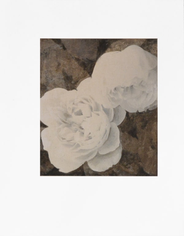 Michael Kellers, Study for Two White Roses, 2015