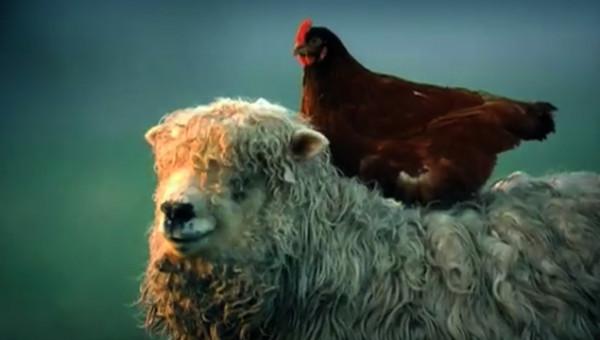 <p>Waitrose</p><p>'I Feel Free'</p><p>Dir: Stuart Douglas. Nice Shirt Films</p>  <p>Bank Hoggins O'Shea FCB</p>