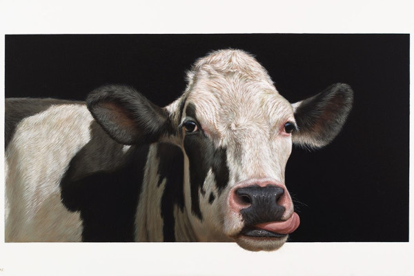 'Susan the Cow' by Alexandra Klimas – Oil on canvas, 70 x 120cm