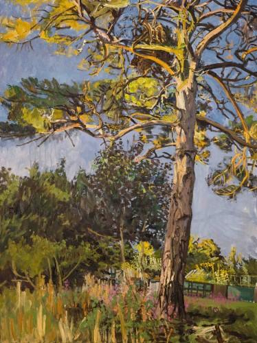 <em>Pine by a Garden - Summer Evening</em>, 2013-14