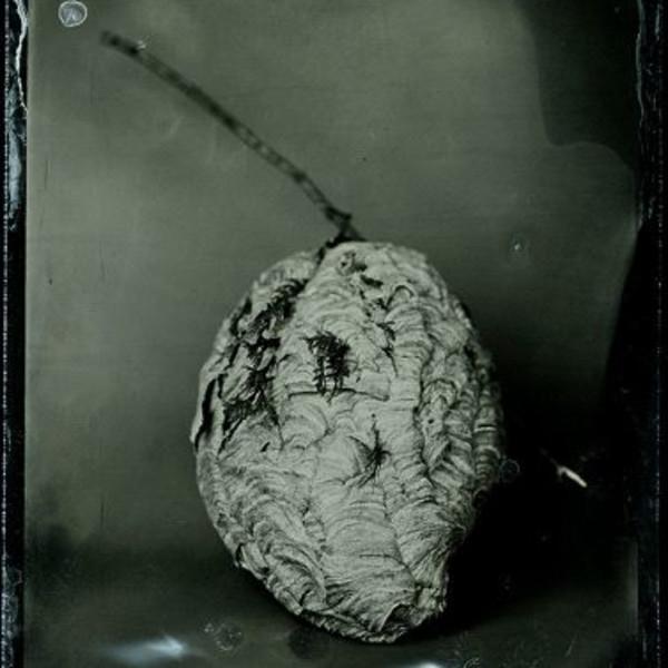 Susan Seubert - Hornet Nest #1, 2012