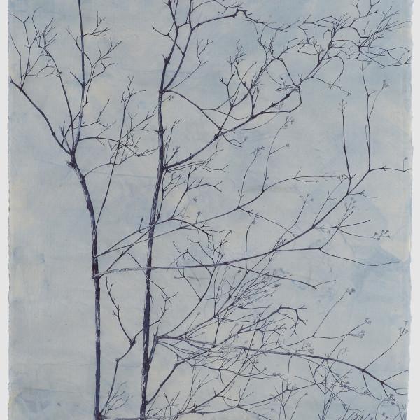 Sarah Horowitz - Blue Tendrils, 2019