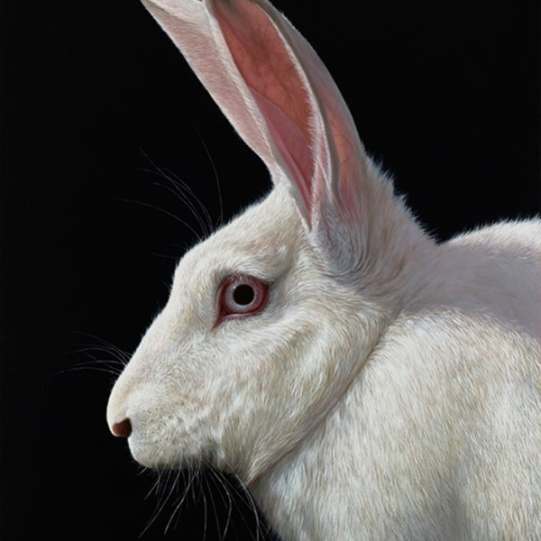 Alexandra Klimas - Snowy the Rabbit I