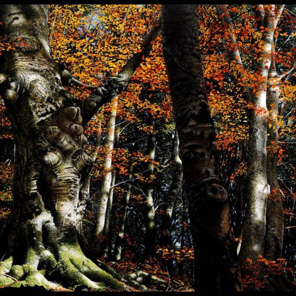 Raphaella Spence - Autumn Colours
