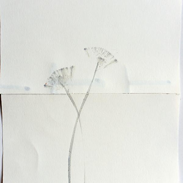 Mireille Gros, Fictional Plants 38, 2019