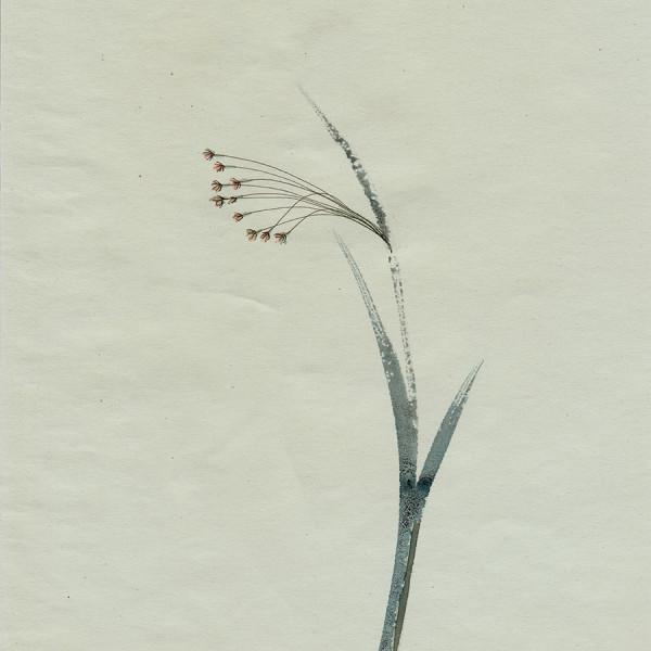 Mireille Gros, Fictional Plants 12, 2019