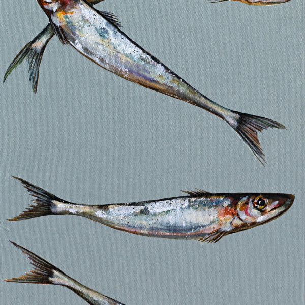 Caroline Cleave, Sardine Selection