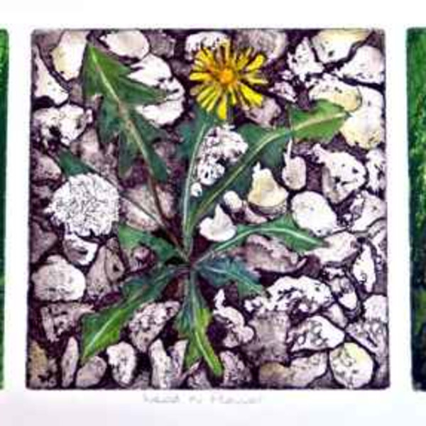 Sarah Seddon, Weeds and Flowers Three Coloured Plates